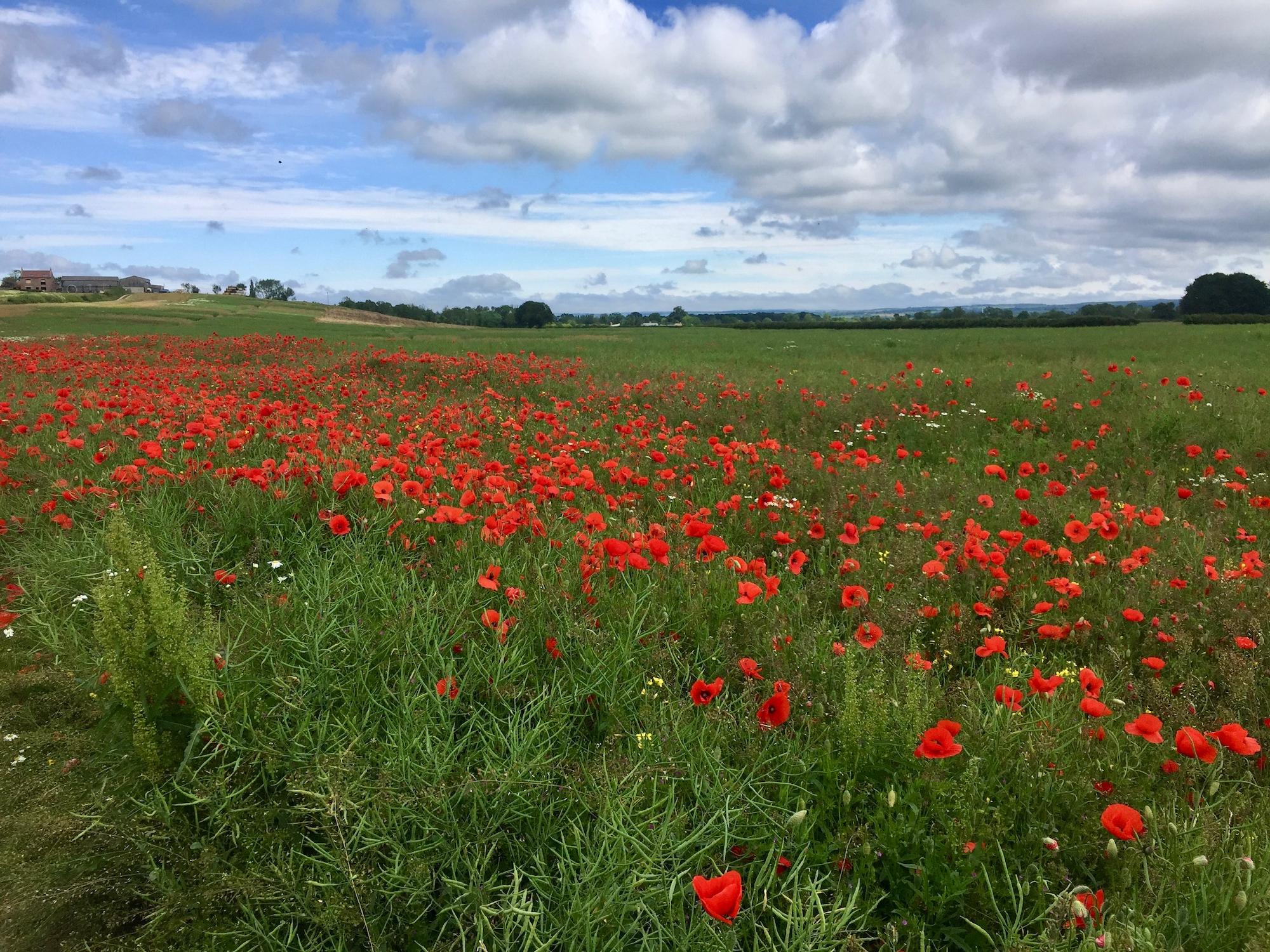 Wildflower Border in a field